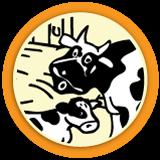 Boowa trait la vache